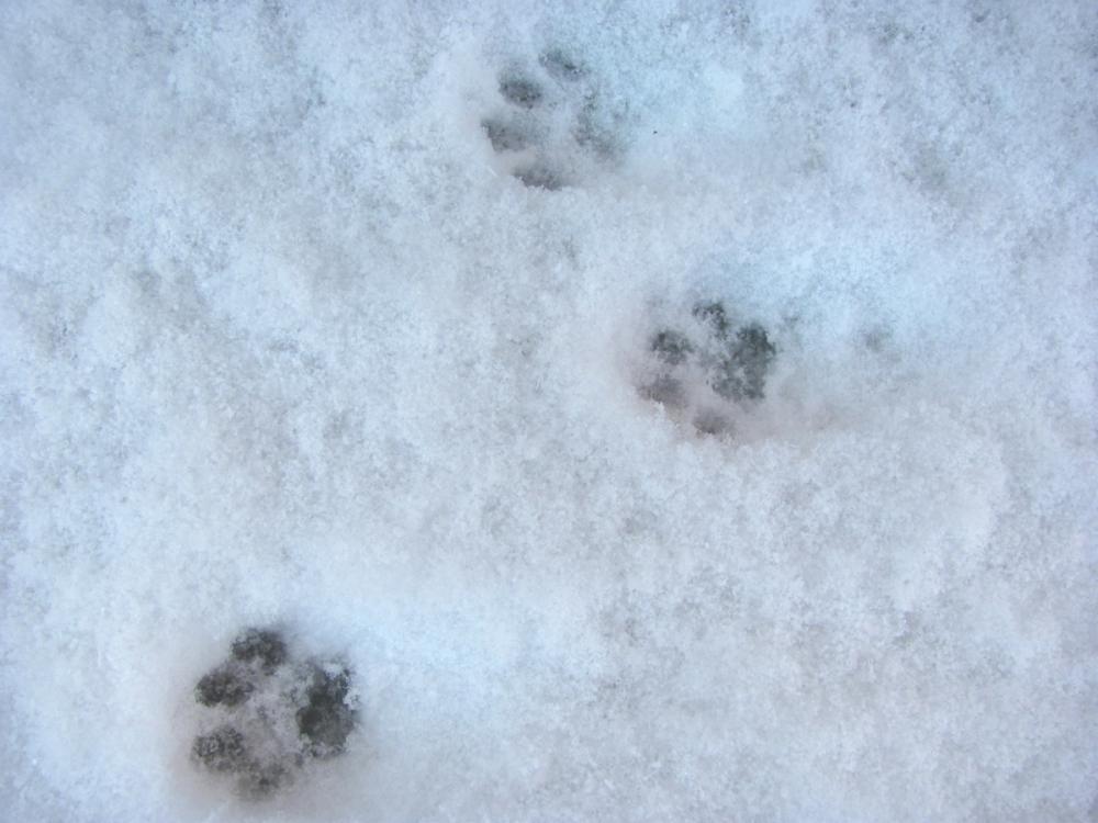 Холода наступают: на грядущей неделе в Морозовске похолодает до -10