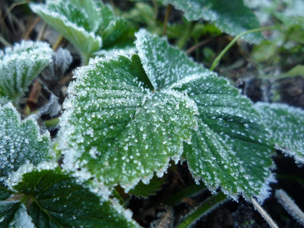 Заморозки в Морозовске могут сохраниться в ночь с понедельника на вторник