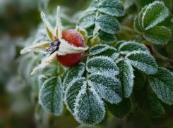Гибель сельскохозяйственных растений и урожая косточковых фруктов прогнозируют для Ростовской области