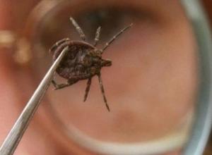 Морозовский район попал в число самых опасных по укусам клещей