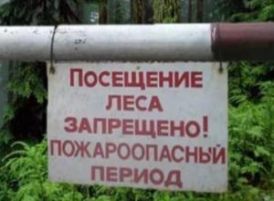 Прокурор Морозовского района назвал сроки запрета на посещение леса