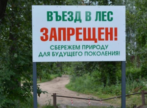 Введен режим ограничения пребывания граждан в лесах возле Морозовска