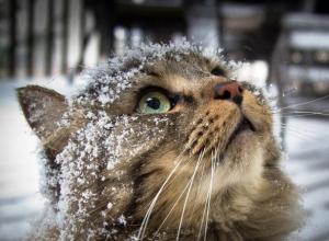 Зима на подходе - синоптики обещают морозовчанам снег