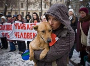 В Морозовске и Ростовской области запретили убивать бродячих животных