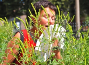 Большое количество злостного карантинного сорняка нашел Россельхознадзор в Морозовском районе