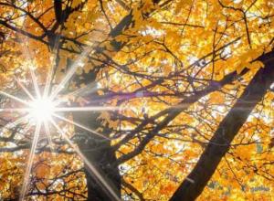 Последняя теплая неделя года: в Морозовске скоро наступит настоящая осень