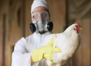 Как действовать период угрозы распространения гриппа птиц объяснил заведующий сектором предупреждения ЧС в Морозовске