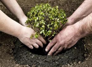Место посадки деревьев морозовчанам нужно согласовать заранее