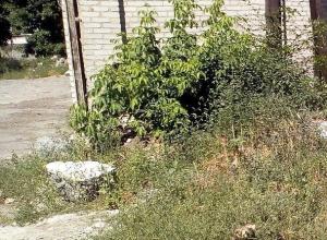 Стали известны первые подробности ужасной находки в укромном месте рядом с вокзалом Морозовска