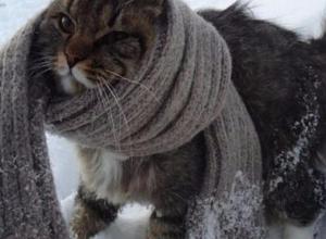 13 января в Морозовске значительно похолодает