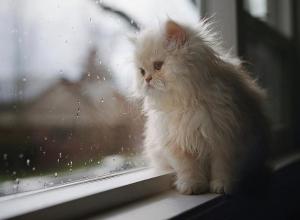 Утро новой недели морозовчане встретят с небольшим дождем