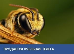Продается телега для перевозки пчел