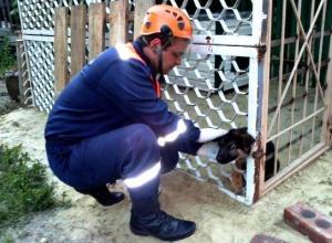 Спасатели в Морозовске освободили застрявшую собаку