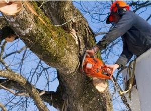 Ответ юриста: Куда обратиться, чтобы спилили старое дерево?