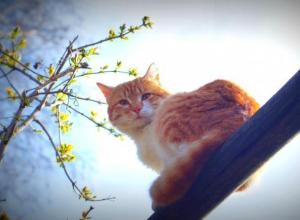 Теплый и солнечный воскресный день ждет морозовчан 15 апреля