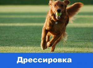 Общий курс дрессировки для собак