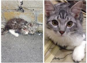 Кот, которому повезло: история, рассказанная вне конкурса