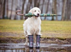 Вместо снега в понедельник в Морозовске пойдет дождь