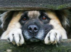Две собаки оказались под риском быть убитыми в хуторе Николаев Морозовского района
