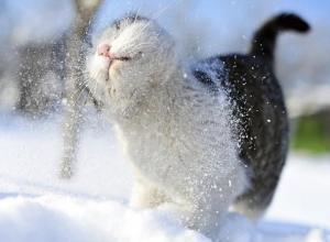 Снежная неделя: с 12 по 18 февраля пушистые осадки в Морозовске будут каждый день