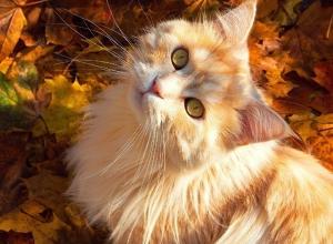 Погода в Морозовске 18 октября обещает стать приятным сюрпризом