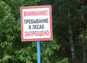 Лес для дончан пока под запретом: ограничение продлили до 1 октября