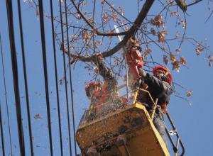 Обрезка деревьев оставит без света жителей одиннадцати улиц и переулков Морозовска