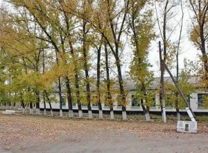 Календарь Морозовска: Ново-Павловские комсомольцы в октябре 1949 года посадили 5000 деревьев