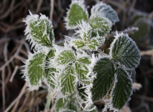Заморозки до -4 ожидаются в Морозовске 24 апреля