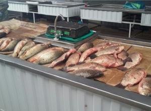 26 с половиной тонн незаконно добытых рыбы и раков «выловили» в рейдах по Ростовской области