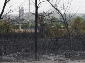 Пожаром выжгло огромные территории травы и леса рядом с Морозовском