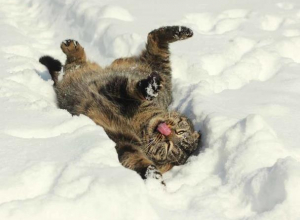 Синоптики снова обещают в Морозовске снежную погоду