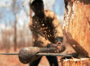 Условный срок получил мужчина за пущенные на дрова деревья в Милютинском районе