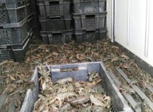 Полтонны живых раков уничтожили в Морозовском районе