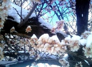 Два очень теплых дня сменятся в Морозовске дождем со снегом и сильным ветром