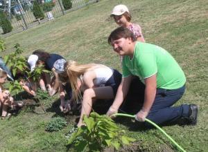 Волонтеры украсили танцевальную площадку многолетними растениями