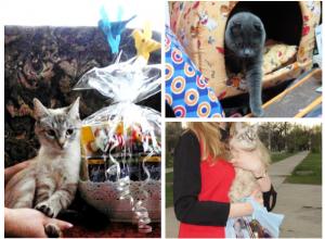 Три пушистика получили приятные подарки за победу в конкурсе «Самый красивый кот-2017»