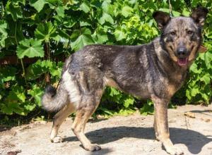 Чудом спасшаяся от усыпления собака обрела в Морозовске новый дом
