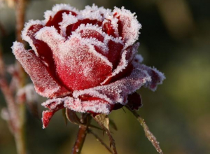 Температура воздуха в Морозовске понизится до -2