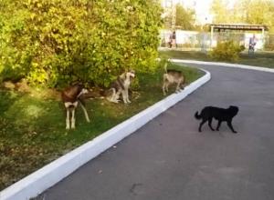 Письмо в редакцию: Приют для передержки собак Морозовску не по карману