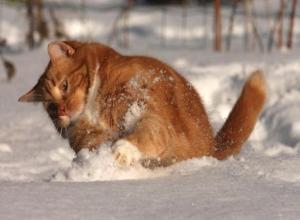 Долгожданный снегопад обещают Морозовску 6 декабря