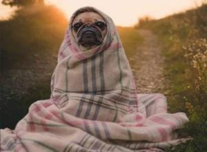 Всю неделю в Морозовске будет постепенно холодать