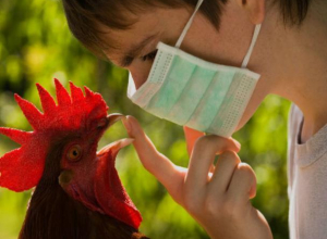 Хутора Старопетровский и Великанов Морозовского района попали под наблюдение из-за птичьего гриппа