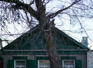 Вопрос-ответ: Когда будут спилены деревья возле дома №24 на улице Ломоносова в Морозовске?