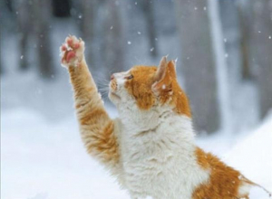 Сильный ветер и снег обещают синоптики морозовчанам 9 января
