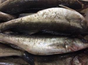 10 тонн рыбы с подложными документами задержали в Морозовском районе