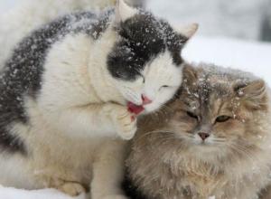 Настоящая зимняя погода установилась в Морозовске до конца недели