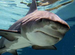 Солдаты-срочники узнали об акулах, живших на территории Морозовска