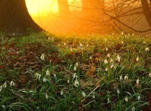 Ночью с субботы на воскресенье температура воздуха в Морозовске опустится до 0°
