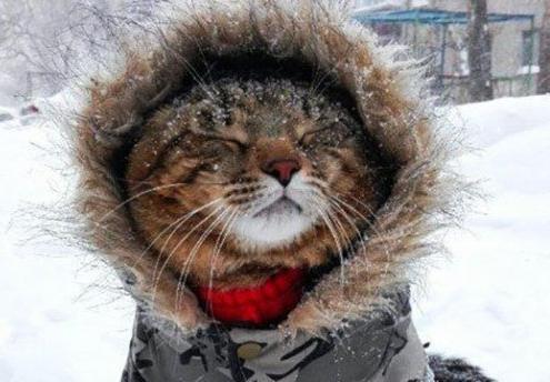 Пасмурно и до -4: для февраля пятница в Морозовске выдастся вполне теплой